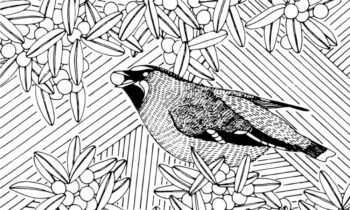 Detail from a winning window decal design by PhD student Lora Zosia Moon